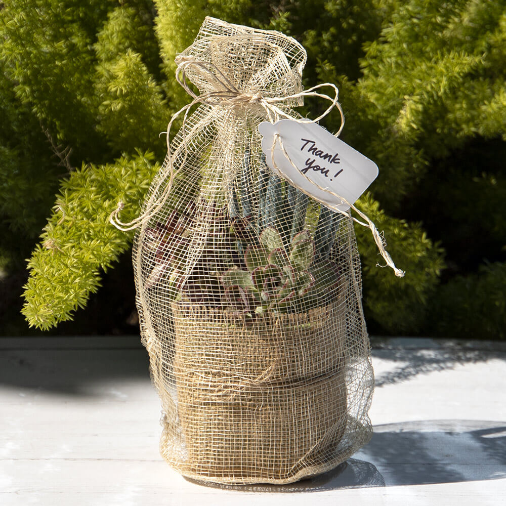 succulent plant wrapped in Paper Mart burlap fabric in a Paper Mart mesh bag